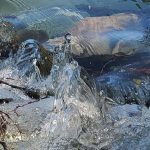 Webinar Series: Indigenous-led Water Relationships within the Columbia Basin